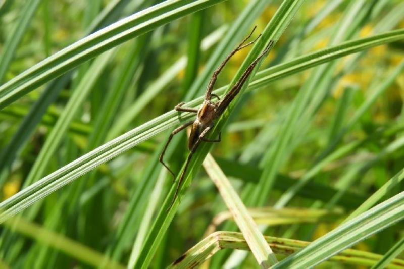 pavouci 4