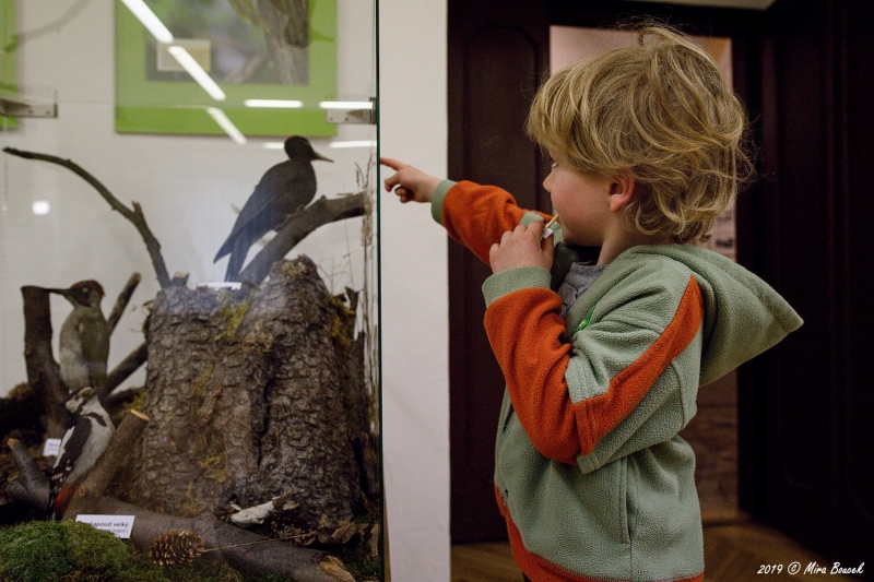 vernisáž výstavy Ptáci G