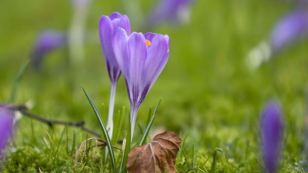 springtime-flowers